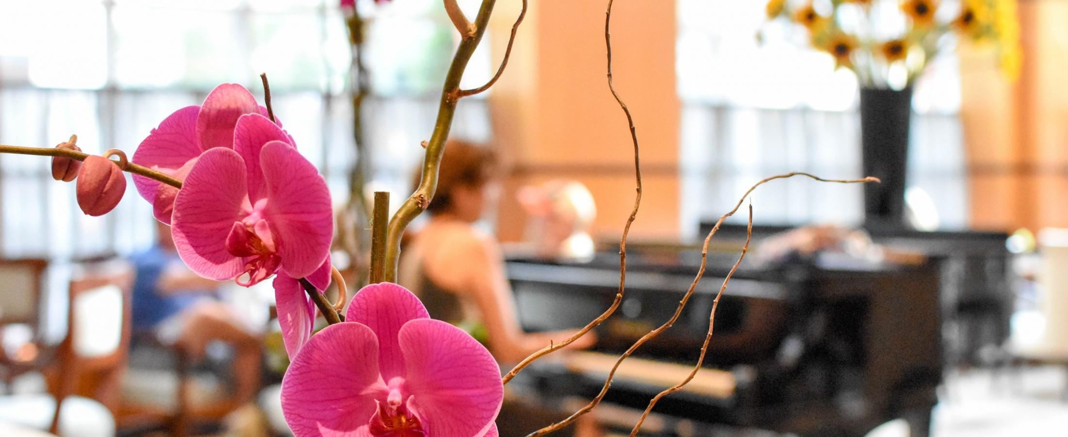 Purple orchid in front of a woman playing the piano in the grand lobby